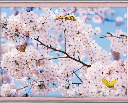 Фотообои глянц. Картина Сакура  98*134 (Тула)