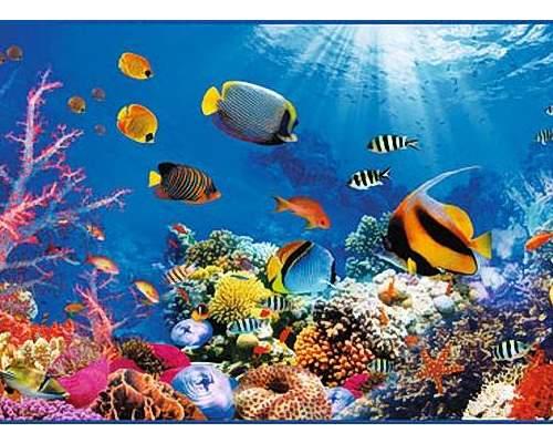 Фотообои VIP Коралловый риф 294*134