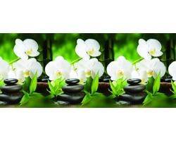 Кухонный фартук Белая орхидея 600*3000мм
